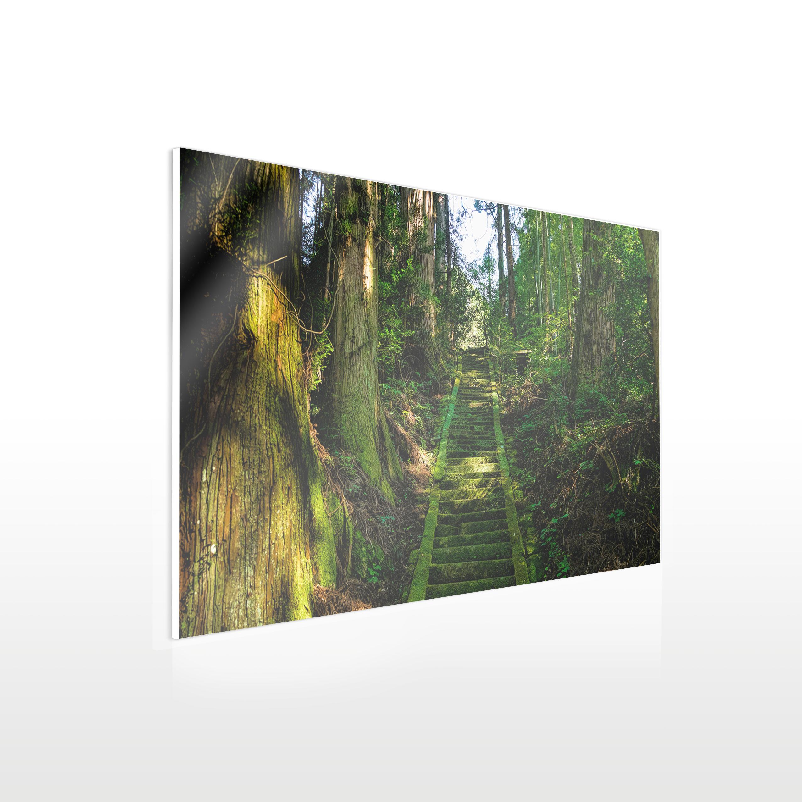 Werbeschilder24.de - Acrylglas Wandbild - Beispiel Urwald